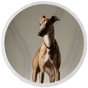 Brindle Greyhound Portrait Round Beach Towel