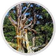 Round Beach Towel featuring the photograph Bristlecone1 2018 by Aaron Bombalicki