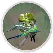 Budgie Love Round Beach Towel