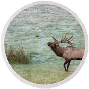 Round Beach Towel featuring the photograph Bugling Bull by Rod Best