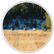 Round Beach Towel featuring the photograph Bull And His Babes by Pete Federico