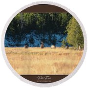 Round Beach Towel featuring the photograph Bull And His Babes Poster by Pete Federico