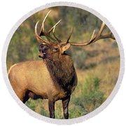 Bull Elk In Rut Bugling Yellowstone Wyoming Wildlife Round Beach Towel