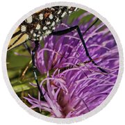 Butterfly Closeup Vertical Round Beach Towel