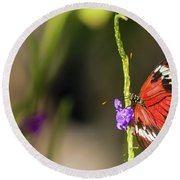 Butterfly Landing On Purple Flower Round Beach Towel