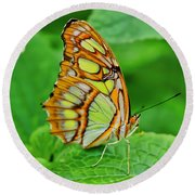 Butterfly Leaf Round Beach Towel