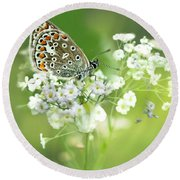 Butterfly On Babybreath Round Beach Towel