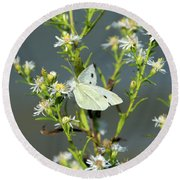 Cabbage White Butterfly On Flowers Round Beach Towel