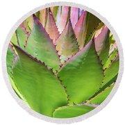 Cactus 4 Round Beach Towel