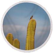 Cactus Wren Round Beach Towel