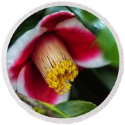 Camellia Bloom And Leaves Round Beach Towel
