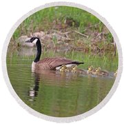Canada Goose And Goslings Round Beach Towel
