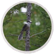 Round Beach Towel featuring the photograph Canada Jay 101305 by Rick Veldman