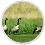 Canadian Geese 3s Company1  Round Beach Towel