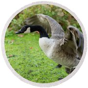 Round Beach Towel featuring the photograph Canadian Goose With Wings Stretched by Scott Lyons