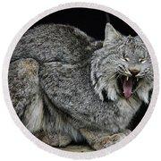 Canadian Lynx Round Beach Towel