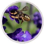 Carder Bee On Salvia Round Beach Towel