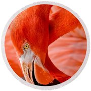 Caribbean Flamingo Round Beach Towel