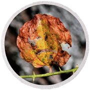 Round Beach Towel featuring the photograph Carved Pumpkin Leaf At Gordon's Pond by Bill Swartwout Fine Art Photography