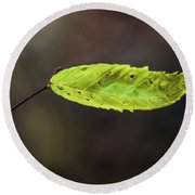 Round Beach Towel featuring the photograph Catching Raindrops  by Michael Arend