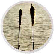 Cattails In The Sun Round Beach Towel