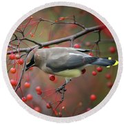 Round Beach Towel featuring the photograph Cedar Waxwing 102206 by Rick Veldman