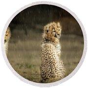 Cheetah Cubs And Rain 0168 Round Beach Towel