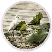 Chinese Egret Round Beach Towel