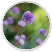 Chive Blossoms Round Beach Towel