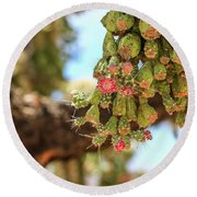 Round Beach Towel featuring the photograph Cholla Cactus Blooms by Dawn Richards