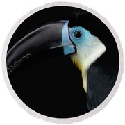 Close-up Channel-billed Toucan, Ramphastos Vitellinus, Isolated On Black Round Beach Towel