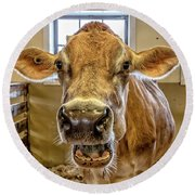 Close Up Of A Jersey Dairy Cow Round Beach Towel