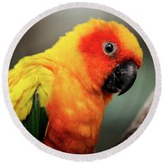 Close Up Of A Sun Conure Parrot. Round Beach Towel