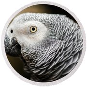 Close Up Of An African Grey Parrot Round Beach Towel