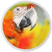 Close Up Of The Macaw Bird. Round Beach Towel