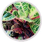 Colorful - Croton - Plant Round Beach Towel