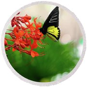 Common  Birdwing Round Beach Towel