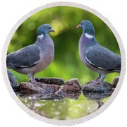 Common Wood Pigeons Meeting At The Waterhole Round Beach Towel