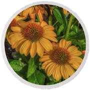 Round Beach Towel featuring the photograph Coneflowers  by Guy Whiteley