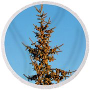Round Beach Towel featuring the photograph Cones by Jon Burch Photography