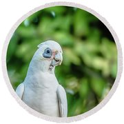 Corellas Outside During The Afternoon. Round Beach Towel