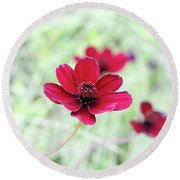 Cosmos Black Magic Flower Round Beach Towel