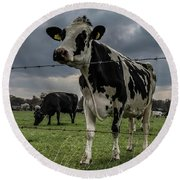 Round Beach Towel featuring the photograph Cows Landscape. by Anjo Ten Kate