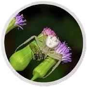 Crab Spider With Bee Round Beach Towel