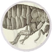 Cross-section Of A Flea From Micrographia Round Beach Towel