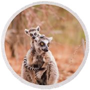 Round Beach Towel featuring the photograph Curiosity by Alex Lapidus