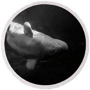 Curious Beluga Round Beach Towel