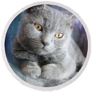 Cute Chartreux Kitten Round Beach Towel