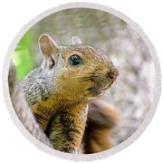 Cute Funny Head Squirrel Round Beach Towel
