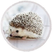 Cute Hedgeog Round Beach Towel